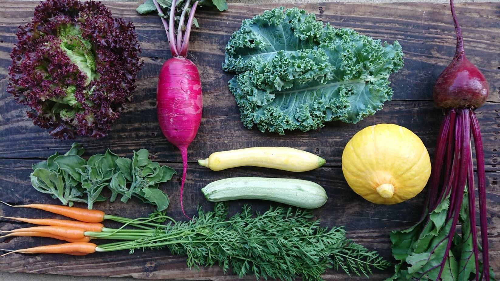 茨城県守谷産おまかせ 旬の無農薬野菜セット